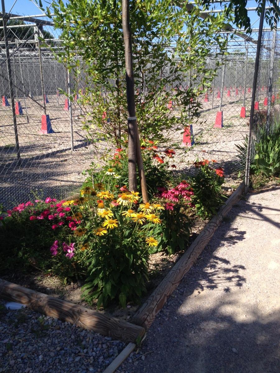 Labyrinthe aux 100 fleurs - Trouillas - Labyrinthes